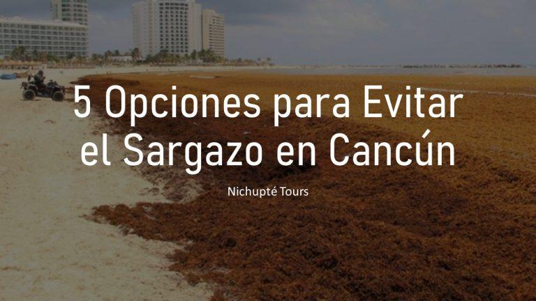 5 Opciones para Evitar el Sargazo en Cancún