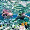 tour a cozumel snorkel